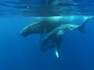 baleines maritime
